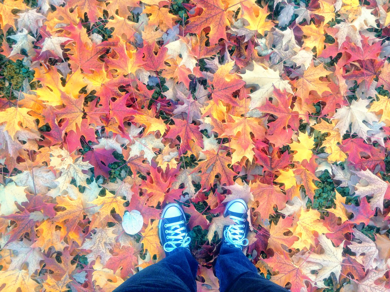 ...durch buntes Herbstlaub stapfen