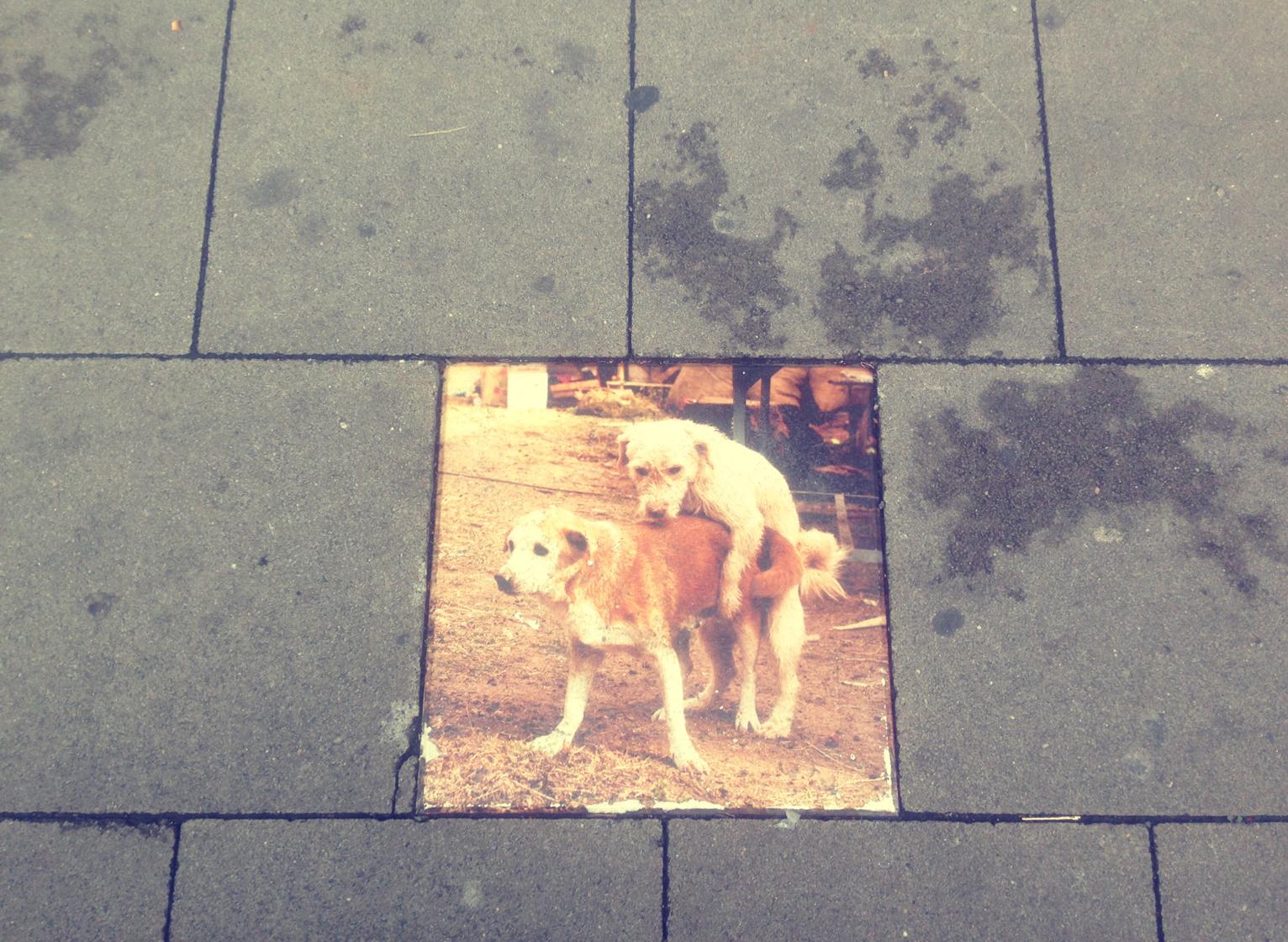 ...auf die schönen Kleinigkeiten in der Welt achten (zum Beispiel versteckte Streetart)