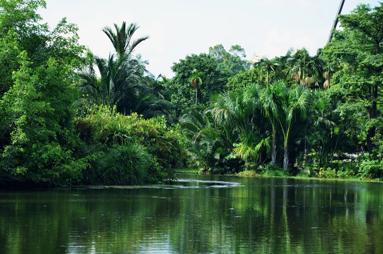 Grünste Natur im Botanischen Garten