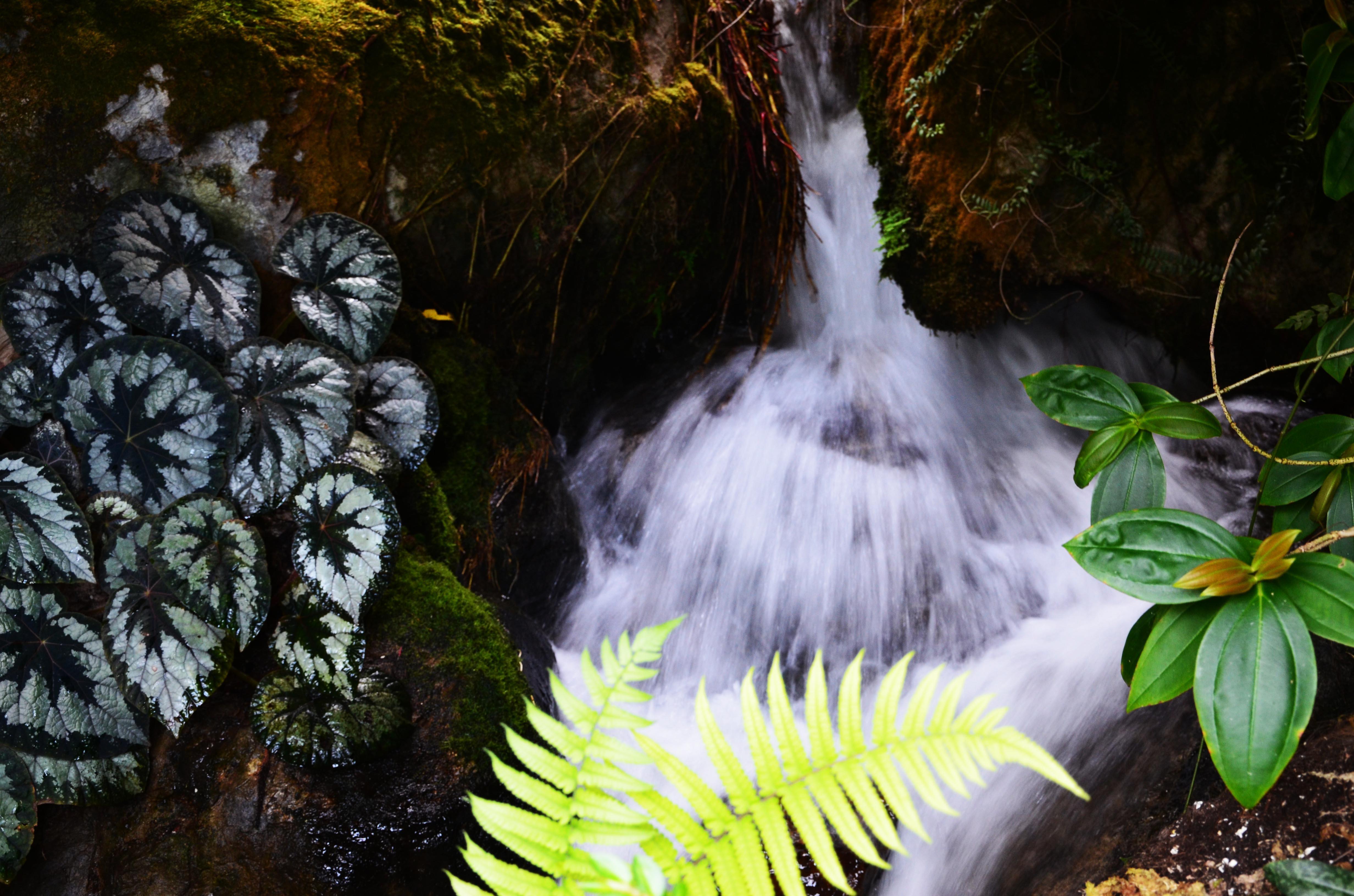 Willkommen im Regenwald!