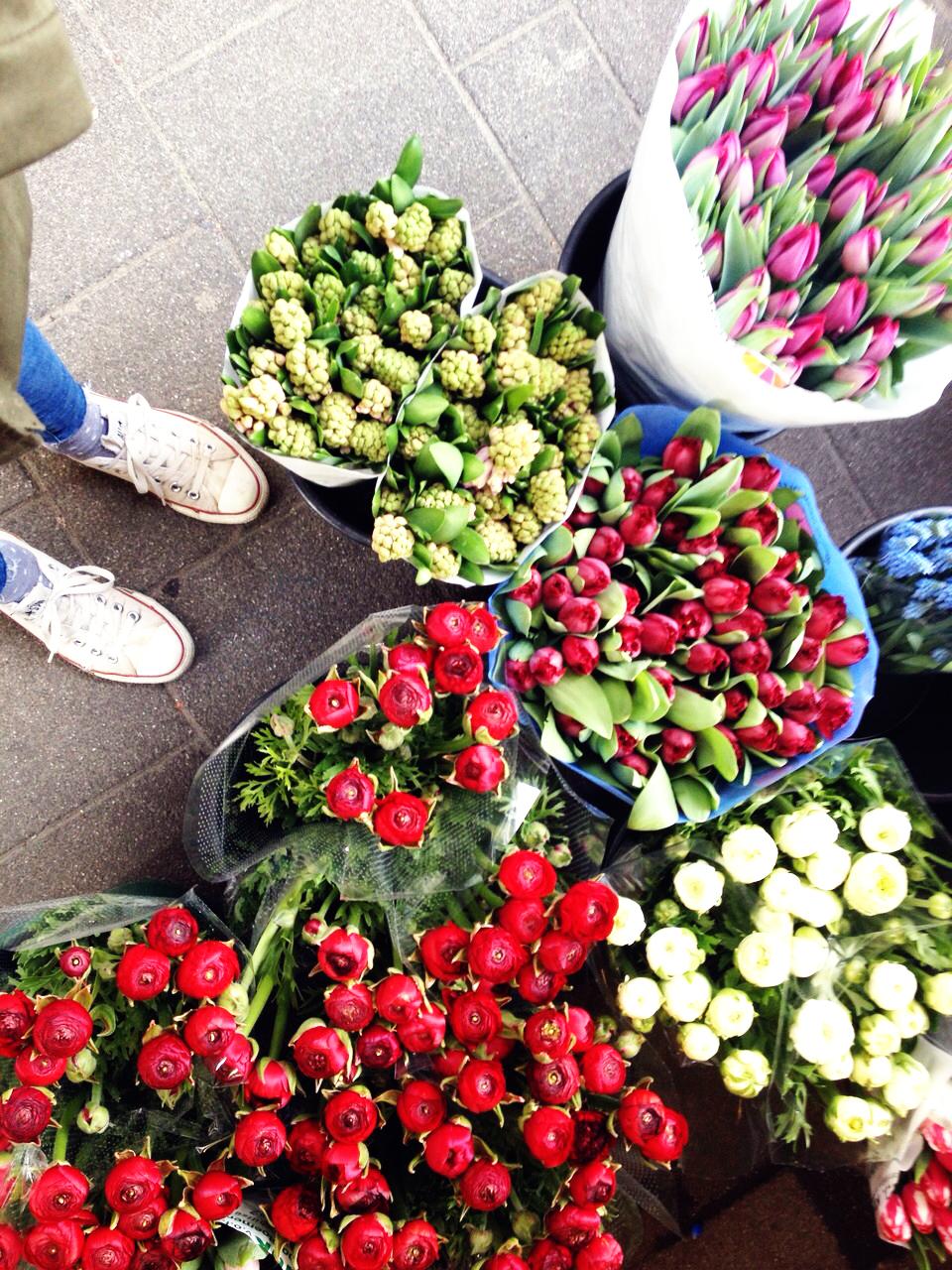 Holländische-Tulpen