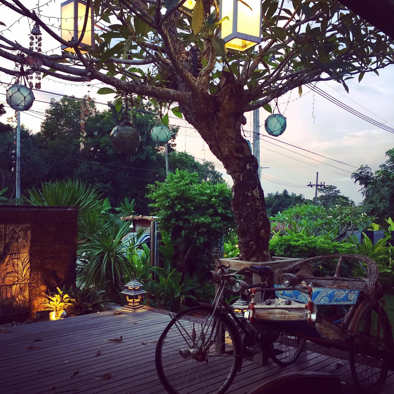 Leuchtbaum in der Abenddämmerung auf der Insel Koh Lanta
